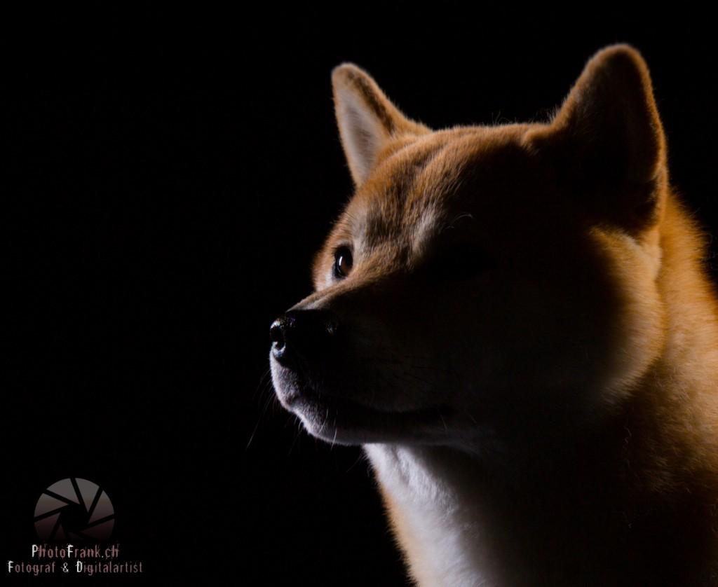 Tiershooting mit Supermodel Kusu
